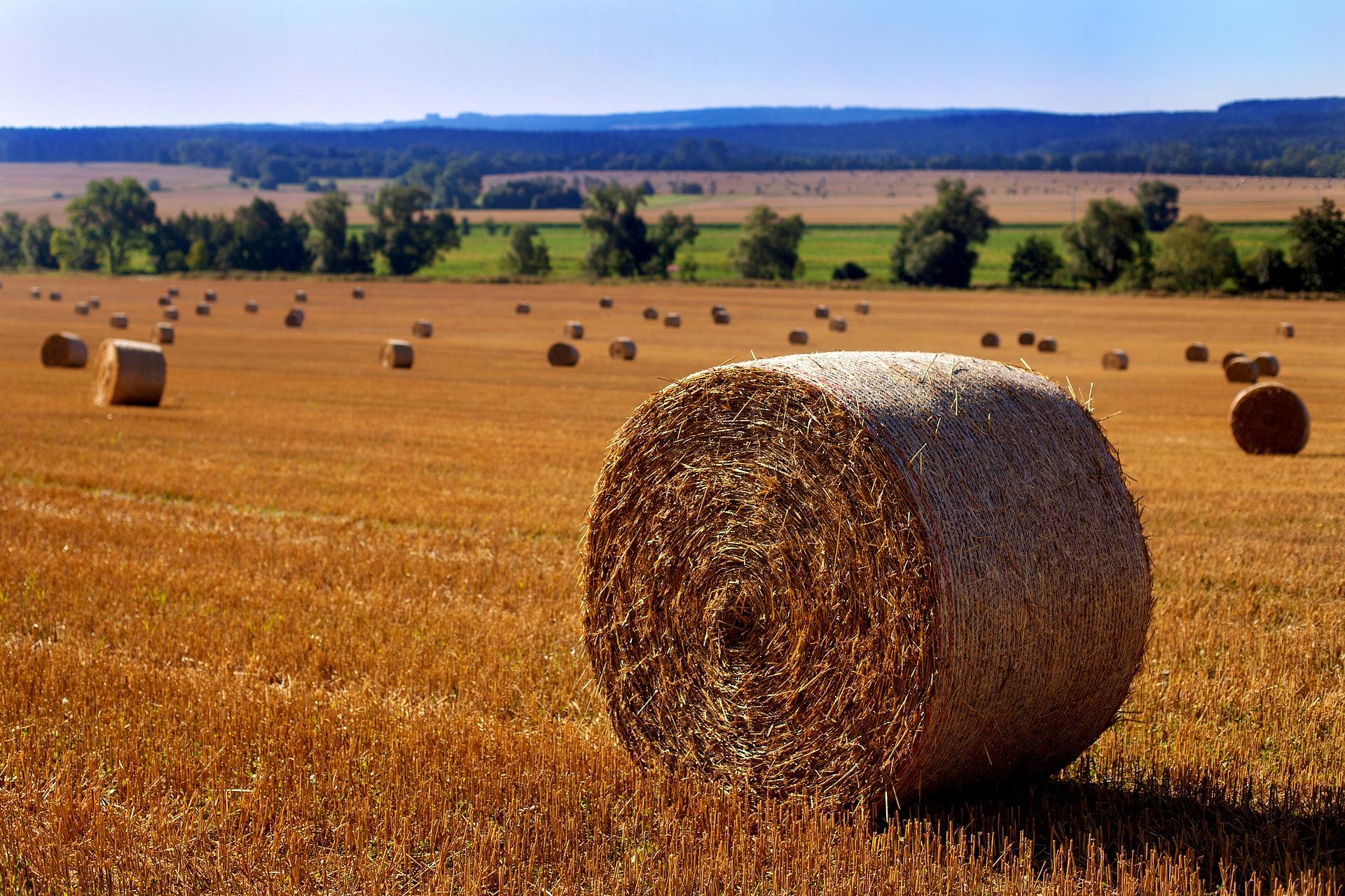RuralVive